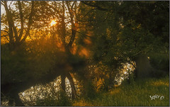 Sunglow. (Picture post.) Tags: landscape nature green water mist sunrise trees reflections shadows paysage arbre brume sunburst