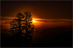 Sonnenuntergang am Grillenparz (robert.pechmann) Tags: grillenparz grillparz kremstal oberschlierbach schlierbach oberösterreich sonnenuntergang baum robert pechmann sunset