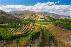 Fields of grapes (katepedley) Tags: winery vineyard grapes wine bannockburn otago otagonz summer green southisland south island new zealand newzealand central canon 5d 1740mm polariser