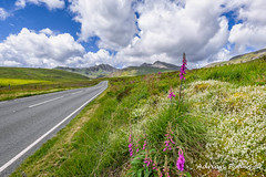 Road To Snowdon Mountain (Adrian Evans Photography) Tags: yrwyddfa capelcurig snowdonia flowers hill hdr summer june flora uk british snowdonsummit sky cribgoch lines landscape snowdonianationalpark snowdonhorseshoe landmark outdoor snowdonmassif welshlandscape clouds bluesky welshlandmark welsh wales tarmac welshmountain highway adrianevans foxgloves snowdon scenic gwynedd road northwales a4086 mountain