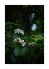 This work is 6/15 works taken on 2019/5/15 (shin ikegami) Tags: asia sony ilce7m2 sonyilce7m2 s7ii 40mm voigtlander nokton nokton40mmf14sc tokyo photo photographer 単焦点 iso800 ndfilter light shadow 自然 nature 玉ボケ bokeh depthoffield naturephotography art photography japan earth