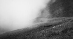 Unpredictable day (Paul-Emile Grisard) Tags: storm fog sheep nikon d5200 scotland rain bnw mono fences day summer ngc