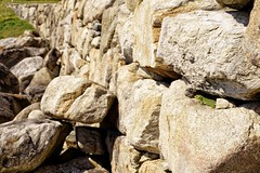 What a sunny day 🐊 (Jano_Calvo) Tags: reptile wall rocky perspective lizard nature animals sunny laxe coruña galicia trail mirrorless green sony a6000 ilce alpha 1650mm