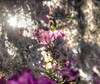Revealed-The Curtain of Heaven (donna.chiofolo (on and off)) Tags: nature light mood atmosphere colors bokeh beauty spanishmoss bonaventure spring pink garden georgia poetryinnature poetry nikon outdoor composition heaven life acrostic travelphotography travelgirl
