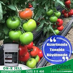 profert-dmts (Profert Gübre) Tags: damlama dayanaışma domates design tomato toprak fertilizer profert