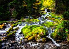 Waterfall (eimarkranendonk) Tags: tree trees green waterfall nature natural lech valley water landscape moss flow vorarlberg austria autumn alps lechtal