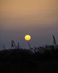 Sanibel Sunrise 6/25/19 #sanibelisland #sanibel #sanibelflorida #florida_greatshots #sunrisesofinstagram #instasunrise #minimal #olympusinspired #olympuspenf #mzuiko40150mm #landscapephotography #photooftheday #wanderlust #floridasky #sunrise_lovers (Sivyaleah (Elora)) Tags: sanibel island florida vacation june 2019 sun olympus penf pen f zuiko 40150mm