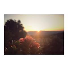 Saluto al sole (tammaro alessandra) Tags: luce sole campagna paesaggio veduta orizzonte mattino fiore alba
