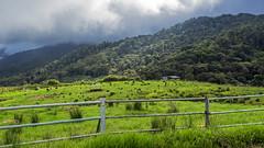 Everything in green. (Andy @ Pang Ket Vui ( shootx2 )) Tags: kundasan sabah cow desa farm green landscape fujifilm x100f breezing cool air