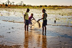 Little Fish (Rod Waddington) Tags: africa african afrique afrika madagascar malagasy rice fishing fish fields field net little water waterlily girls sunlight sunset baobabs landscape people group