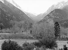 Endovalley (LarsHolte) Tags: pentax 645 pentax645 645n 6x45 smcpentaxfa 200mm f40 120 film 120film analog analogue kosmo foto mono 100iso mediumformat blackandwhite classicblackwhite bw monochrome filmforever filmphotography d76 ishootfilm larsholte homeprocessing usa rockymountain nationalpark trees landscape mountains