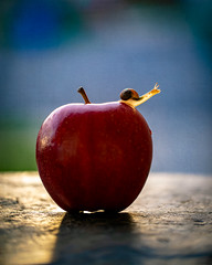 apple (auntneecey) Tags: snail apple snailandfood tabletop texture 2lilowls 365the2019edition 3652019 day176365 25jun19