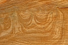 Le bois est Roi - The wood is King (p.franche malade - Sick) Tags: tronc texture bois hiver arbre couronne motif abstrait nature parc trunk wood winter tree crown pattern abstract park macro sony sonyalpha65 dxo photolab2 bruxelles brussel brussels belgium belgique belgïe europe pfranche pascalfranche schaerbeek schaarbeek parcjosaphat josaphatpark baum 樹 trae árbol δέντρο fa albero ツリー treet drzewo дерево ต้นไม้