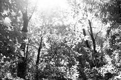 Parc des Raisses @ Annecy-le-Vieux (*_*) Tags: europe france hautesavoie 74 annecy savoie 2019 june spring printemps sunny city annecylevieux bw