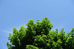 Parc Vignières-Pommaries @ Annecy-le-Vieux (*_*) Tags: europe france hautesavoie 74 annecy savoie 2019 june spring printemps sunny city annecylevieux