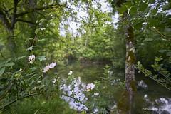 Un petit cours d'eau enchanteur (domingo4640) Tags: lot quercy vers valleeduvers eau riviere levers loxia loxia21 loxia2821 paysage paysagebuccolique departementdulot tourismelot
