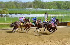 "2019-04-28 (5) r7 already spreading out headed for the first turn (JLeeFleenor) Tags: photos photography md marylandracing maryland marylandhorseracing equine laurelpark horses jockey جُوكِي ""赛马骑师"" jinete ""競馬騎手"" dżokej jocheu คนขี่ม้าแข่ง jóquei žokej kilparatsastaja rennreiter fantino ""경마 기수"" жокей jokey người thoroughbreds equestrian cheval cavalo cavallo cavall caballo pferd paard perd hevonen hest hestur cal kon konj beygir capall ceffyl cuddy yarraman faras alogo soos kuda uma pfeerd koin حصان кон 马 häst άλογο סוס घोड़ा 馬 koń лошадь outside outdoors"