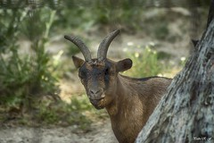 Fijando la mirada (pedroramfra91) Tags: naturaleza nature exteriores outdoors animales animals