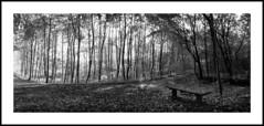 H202_30 (michalis_dk) Tags: horizon202 panoramic russian rolleisuperpan200250 studional115 6½min