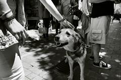 HOLA (a-r-g-u-s) Tags: amor amistad fidelidad perros dogs bichonmaltes