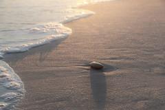 beach time... RS -3540 (P.E.T. shots) Tags: beach shore ocean good life stone sun sand
