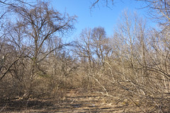 Remembering Winter - Bunches Of Branches (Modkuse) Tags: winter wintercolor winterlandscape nature natural art artphotography photoart fineartphotography fineart kodakektachromee100simulation fujifilm fujifilmxt2 xt2 fujinon fujinonxf1855mmf284rlmois xf1855mmf284rlmois