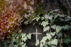 Grabstein mit Efeu (mdmove1962) Tags: move1962gmxnet move1962 michad berlin dorotheenfriedhof friedhof tombstone grabstein efeu nopeople deutschland germany loneliness harmony mourning simplicity winter cold depthoffield religion culture art placeofworship heritage