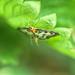 Weird Butterfly