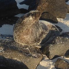 Galapagos Islands April 2019 (MisterQque) Tags: galapagos galapagosislands ecuador southamerica latinamerica