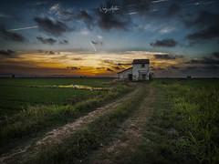 Entre los campos de arroz (:) vicky) Tags: vicky valencia arrozal arroz spain sunset sol nocturna nubes naturaleza atardecer abigfave