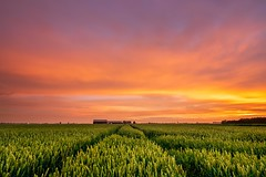 Sunset Lines (Ellen van den Doel) Tags: sky rain storm graan color nature nederland netherlands regen thunder outdoor cloud 2019 natuur field kleur juni sunset goeree thunderstorm overflakkee