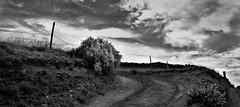 The gorse bush (kevin.fahy1) Tags: gorse bush monochrome contrast road sky path outdoor moody cloud blackandwhite uk tree bw
