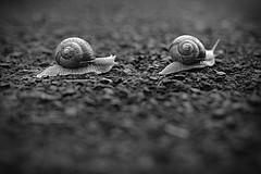"""The Race"" (westwood outdoors) Tags: snail racing blackandwhite outside outdoor ontheground vintagelenses oldlens carlzeiss flektogon 35mm focus national naturephotography naturlove nature slimy littlecreatures"