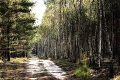 *** (pszcz9) Tags: polska poland przyroda nature natura naturaleza pejzaż landscape las forest forestimages droga road beautifulearth sony