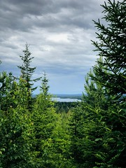 Cloudy Day Ride (pjen) Tags: finland nordic boreal forest nature clean fresh cloudy summer lake mtb lakeland evergreen conifer