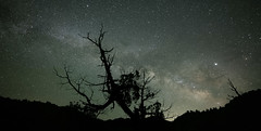 Solitary (magnetic_red) Tags: tree barren sky night stars starry milkyway lonesome solitary nevada