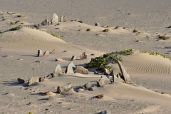 Strandloper archeological site - the remnants of temporary shelters constructed by strandlopers, the beachcoming San that roamed in this region until a century ago. They would have stretched animal skins over the stone walls to protect from the wind and s