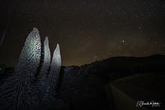 Tajinastes Rojos y La Vía Láctea Parque Nacional del Teide (El Coleccionista de Instantes) Tags: tajinastesrojos fotostajinastesrojos nocturnastajinastesrojos tajinastesrojosentenerife tajinastesrojosparquenacionaldelteide imagenestajinastesrojos tajinastesyvialactea elcoleccionistadeinstantes via lactea parque nacional del teide vialacteaparquenacionaldelteide