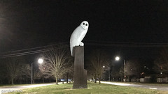 The Owl Statue on Wednesday morning (garydlum) Tags: owlstatue publicart