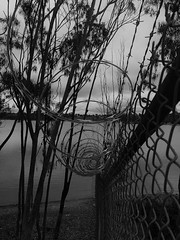 Going Through (Rand Luv'n Life) Tags: odc our daily challenge through chainlink fence razor wire tree branches lake shoreline monochrome blackandwhite outdoors