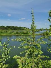 IMG_20190623_174056 (claudie31) Tags: paysage landscape lake lac bleu blue