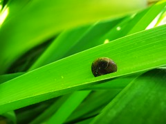 IMG_20190623_101614 (claudie31) Tags: snail green macro macrophotography escargot insect