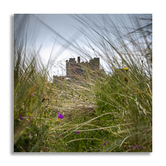 Bamburgh Castle through the grass. (johnhjic) Tags: johnhjic northumberland castle grass wind breeze light colour color bamburgh yellow purple flag pole grasses flowers wild tower turret coastline 85mm pce anglosaxons medieval normans