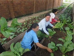 youth garden, Phnom Penh, Cambodia,  $119 raised