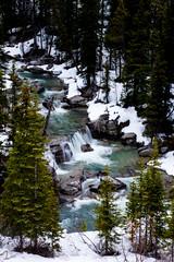 Nigel Creek (ellieupson) Tags: creek river waterfall rocks blue trees green snow winter canada alberta nationalpark icefieldparkway