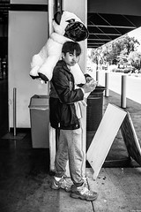 SMCF-2018 34.jpg (Pictopticon) Tags: sanmateo sanmateoca sanmateocalifornia sanmateocountyfair blackandwhite blackandwhitephotography dog dogs kidphotography kidphotos monochrome monochromephotography plushtoys pug pugs streetlife streetphotography streetphotos