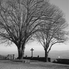 Raising the arms to the heavens. (lebre.jaime) Tags: portugal beira covilhã tree cross analogic film120 mf mediumformat squareformat 6x6 hasselblad 500cm distagon c3560 ilford fp4 iso125 bw blackwhite noiretblanc pretobranco pb ptbw epson v600 affinity affinityphoto