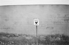 Chicken Patrol (bigalid) Tags: film 35mm minolta f25 ilford xp2 bw may 2019 dumfries c41 plastic fixedfocus kingholm sign
