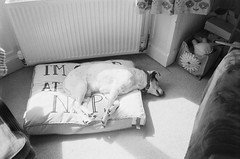 Sleeping Dogs (bigalid) Tags: film 35mm minolta f25 ilford xp2 bw may 2019 dumfries c41 plastic fixedfocus