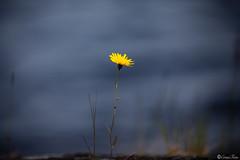 AY6A3177 (fcruse) Tags: cruse sommar 2019 travelphotography naturfoto resefoto canonmarkiv crusefoto sweden sverige naturephotography värmland glafsfjorden glava vanlife vwt5